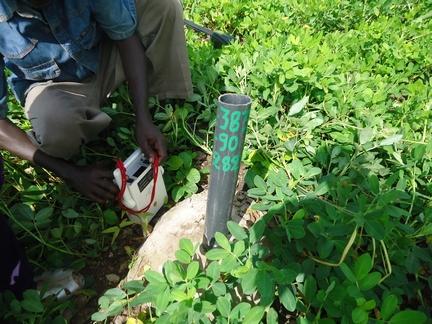 Forage uranifère dans un champ d'arachidespt
